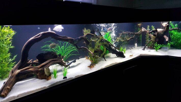 Xác định vị trí sắp xếp của hồ thủy sinh lũa bonsai