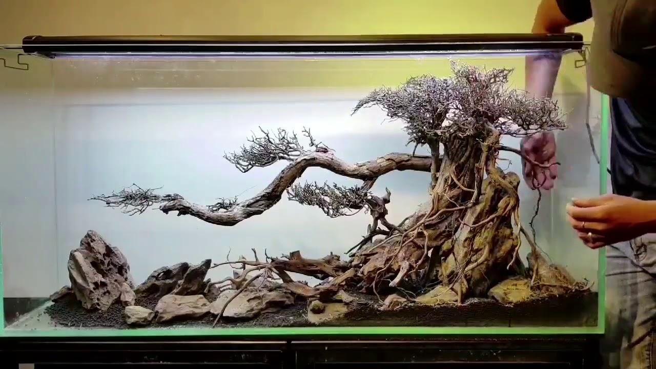 Lũa bonsai là gì ?
